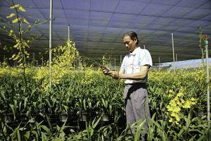 Vườn lan vũ nữ tiền tỷ của lão nông ở Lâm Đồng