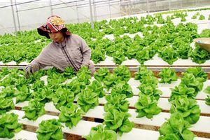 Kêu gọi đầu tư vào nông nghiệp công nghệ cao