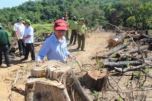 Hoãn xử vụ án phá rừng nghiêm trọng nhất Bình Định