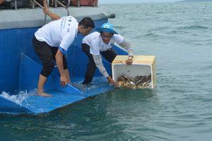 Thả hơn 3 triệu ghẹ con và ghẹ trứng về biển Phú Quốc