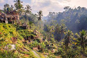 Khám phá trọn vẹn cao nguyên Ubud, Bali chỉ trong 48 tiếng