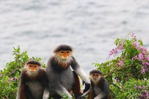 Săn bắn động vật hoang dã là tai họa cho mai sau