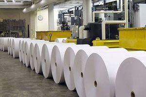 Công nghiệp sản xuất giấy: Doanh nghiệp nội gặp khó vì quy mô sản xuất nhỏ
