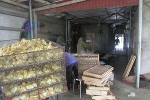 Thường xuyên nuôi 8.000 vịt sinh sản, bỏ túi 8 triệu đồng/ngày