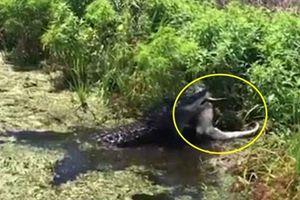 Kinh hoàng cá sấu khổng lồ tìm nơi vắng vẻ giết thịt đồng loại
