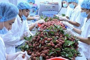 9 tháng đầu năm, xuất khẩu rau quả khởi sắc