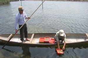 Nuôi chung 'sú, đối, cua, kình', mô hình thủy sản bền vững