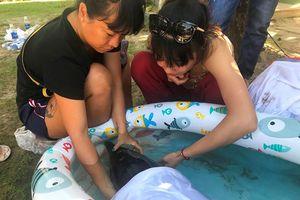 Giải cứu cá heo bị thương nặng trôi dạt vào biển Đà Nẵng