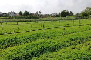 Phú Yên – từ vùng đất khô cằn trở thành 'thiên đường' dược liệu sạch