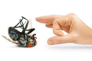 12 cách diệt và đuổi ruồi bằng cây cỏ trong tự nhiên, không độc hại