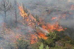 Kinh hoàng cháy rừng dữ dội ở Anh