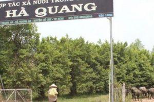 HTX Hà Quang tiếp tục phớt lờ lợi ích chính đáng của xã viên