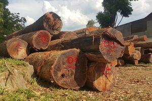 Truy nã hai bị can trong đường dây gỗ lậu của Phượng 'râu'