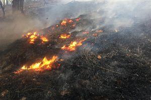 Nghệ An: Gần 50ha rừng bị thiêu rụi, 1 người chết