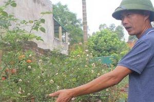 Phú Thọ: Vườn 3.000m2 trồng các loài hoa, mỗi năm thu 700 triệu đồng
