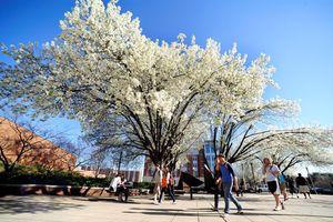 4 đại học Mỹ có nhiều chính sách học bổng cho sinh viên quốc tế