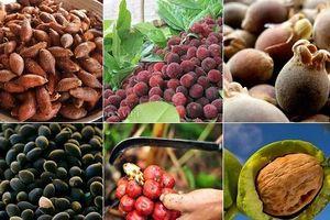 Những trái cây, quả lạ núi rừng hút khách Thủ đô