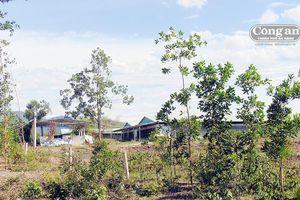 Trang trại heo gây ô nhiễm môi trường trầm trọng