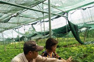 Mỗi tháng 'đút túi' 35 triệu đồng nhờ trồng dương xỉ lấy lá