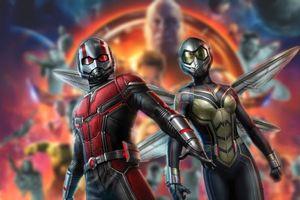 Câu hỏi trong 'Ant-Man and the Wasp' After-Credit khiến 'Avengers 4' thêm phần phức tạp