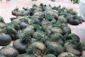 Hưng Yên: 'Bỏ của chạy lấy người' khi bị phát hiện chở hơn nửa tấn tê tê