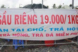 Sầu riêng chỉ 19.000 đồng/kg, dân ùn ùn kéo đến ăn