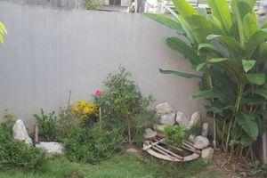 Kỹ thuật trồng cỏ nhung Nhật tạo không gian xanh mát cho ngôi nhà của bạn