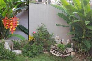 Kỹ thuật trồng cây hoa chuối tràng pháo cho góc vườn đẹp rực rỡ, ấn tượng