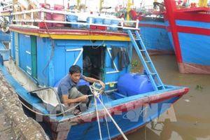 Ứng phó với bão số 3: Toàn bộ tàu thuyền tại Nam Định đã vào nơi neo đậu an toàn