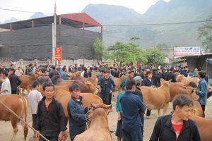 Hà Giang: Khởi sắc sau 3 năm thực hiện tái cơ cấu ngành nông nghiệp