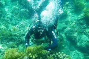 Ngắm những rạn san hô hồi sinh kỳ diệu dưới đáy biển Cù Lao Chàm