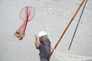 Người dân Hà Nội đổ xô ra sông bắt cá sau cơn mưa