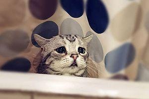 Gặp Luhu – chú mèo đáng yêu có khuôn mặt buồn nhất thế gian