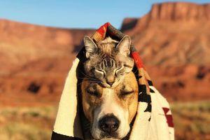 Đôi bạn chó - mèo 'cõng nhau đi trốn' nổi tiếng trên mạng