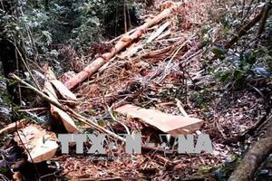 Đề xuất khởi tố hình sự vụ phá hơn 10,5 ha rừng tại Hướng Hóa, Quảng Trị