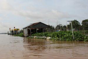Lúng túng xử lý bè cá 'mọc' trên sông Hậu gây khó tàu thuyền