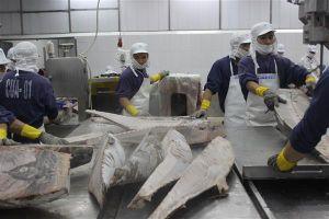Ba thị trường mũi nhọn của xuất khẩu thủy sản Việt Nam
