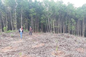 Nhiều vi phạm được Thanh tra huyện Phú Lộc chỉ rõ