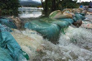 Đê sông Bùi đã an toàn