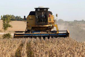 'Đấu' với Mỹ về đậu tương, 'Vua ép đậu' Trung Quốc xin phá sản