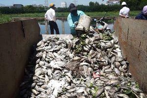 Cá chết bất thường 'tra tấn' khu dân cư