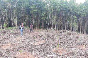 Phú Lộc (Thừa Thiên Huế): Nhiều sai phạm trong quản lý đất rừng phòng hộ