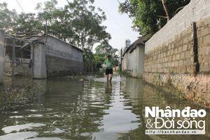 Cận cảnh ngập lụt ở Chương Mỹ: Lũ vịt cũng ngao ngán nước bẩn