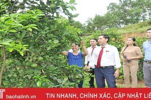 Vay vốn Agribank, nông dân Vũ Quang thu lãi