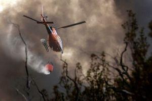 Nắng nóng thiêu đốt châu Âu gây cháy rừng, lò hạt nhân đóng cửa