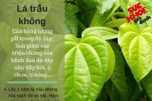 5 loại lá cây chữa bệnh dạ dày an toàn, tốt hơn uống thuốc Tây