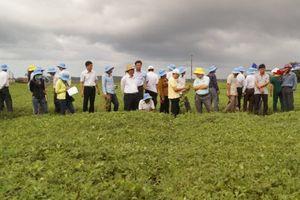 Chuyển biến của ngành nông nghiệp Quảng Ngãi sau 5 năm tái cơ cấu