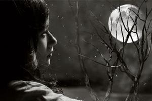 Tôi đã chạm vào mùi hương mê hoặc của trăng