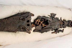 Phát hiên xác ướp hai đầu: Một đầu người, một đầu cá sấu