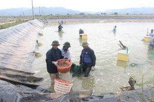 Quảng Ninh: Cơ cấu lại ngành nông nghiệp theo hướng bền vững, thân thiện với môi trường